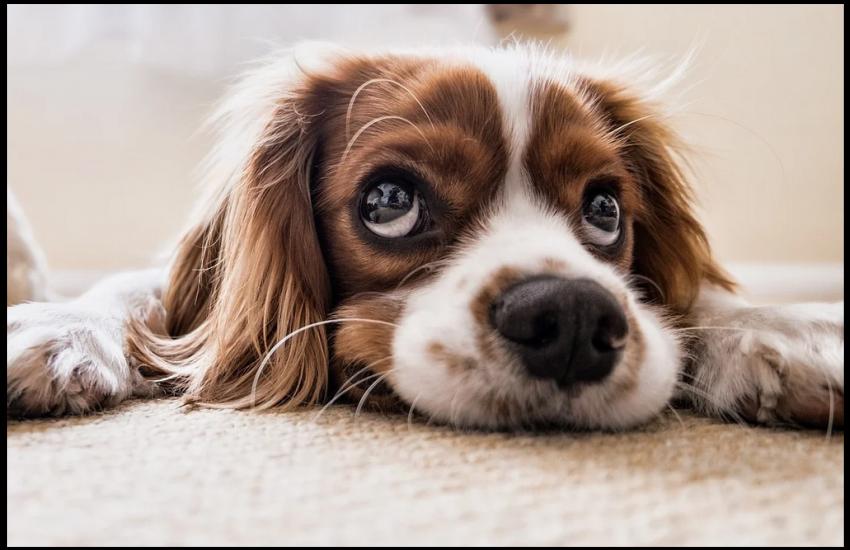 umowa kupna sprzedazy psa
